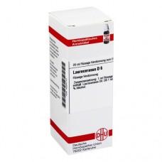 LAUROCERASUS D 6 Dilution 20 ml