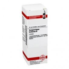 SEMPERVIVUM tectorum Urtinktur 20 ml